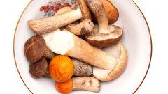 Подосиновик: пищевая ценность. Как готовить подосиновики?