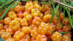 Рецепты из морошки. Полезные свойства северной ягоды