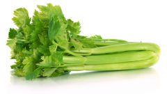 Сельдерей, или селера: лечебное растение прямо с огорода