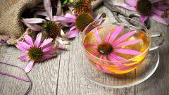 Состав эхинацеи. Применение ее полезных свойств при лечении