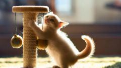 Как сделать когтеточку из ковролина своими руками