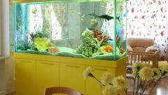 Как пересаживать рыб