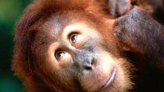 Где живут обезьяны: ареал их обитания