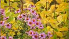 Что делать цветоводу в октябре