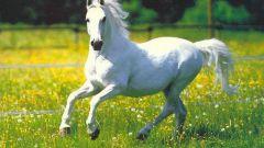 Сонник:  чему снится белая лошадь