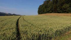 Какие равнины есть в России