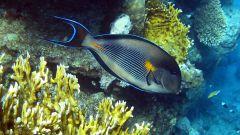Интересные факты про рыб