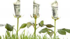 Комнатные растения, привлекающие в дом богатство