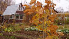 Октябрь: что надо успеть сделать в саду