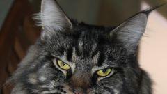 Как организовать питомник кошек, и стоит ли становиться заводчиком