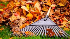 Огород осенью: что делать с опавшей листвой
