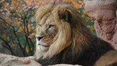 Как вернуть мужчину Льва после расставания