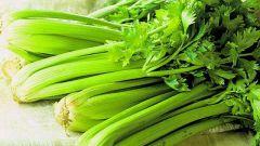 Особенности выращивания черешкового сельдерея