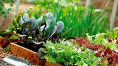 Какие овощи и когда сеять в марте