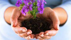 Какие цветы и когда надо сеять в марте