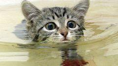 Как помыть кота, если он боится