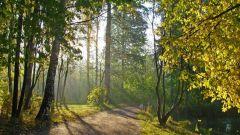 Walks Petersburg - Shuvalovo Park