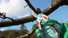 Как делать обрезку плодовых деревьев и кустарников