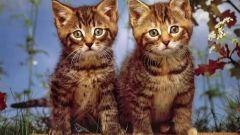 Какие игрушки выбрать для кошки