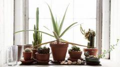 Какие растения выращивать на солнечной стороне