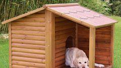 Как построить будку