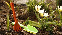 Какие цветы и когда надо сеять в апреле