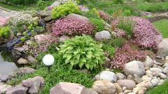 Альпийская горка на садовом участке