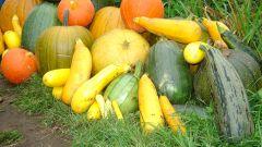 Как сохранить урожай тыкв, кабачков и дынь