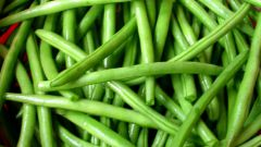 Green beans: growing and care