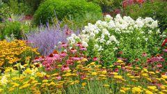 Как правильно высадить рассаду цветов
