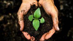 Как сохранить плодородие почвы