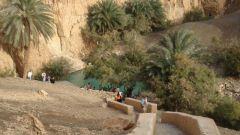 Оазис Нефта - рай в пустыне