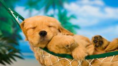 Жара и собаки: важные сведения