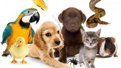 Как выбрать домашнее животное по фэншуй