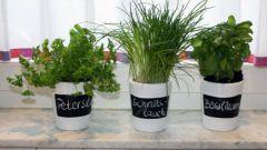 Выращиваем зелень на подоконнике: 11 полезных приправ