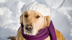 Как связать берет для собаки