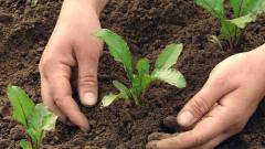 Какие овощи и когда сеять в мае