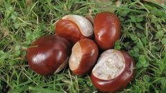Tincture chestnut: useful properties, application, contraindications