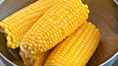 How to cook corn: a few tips