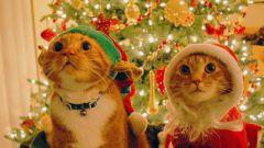 Будет ли 31 декабря выходным днем