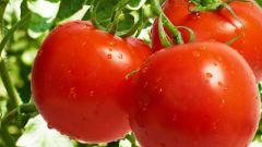 Надо ли томаты подкармливать йодом