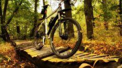 Выбор велосипеда: какой лучше выбрать