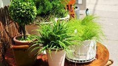 Удобрения для комнатных растений, которые можно сделать самим