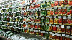 Как выбирать семена для рассады