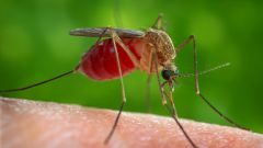 Mosquito control in the country – effective methods