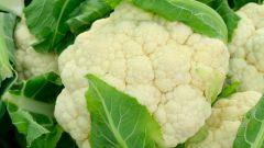Цветная капуста. Что нужно для хорошего урожая