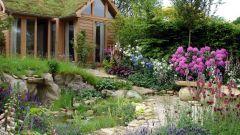 Как обустроить сад на болоте