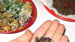 Как собрать семена цветов