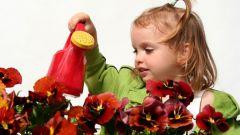 Цветоводство в школе и его роль в воспитании детей
