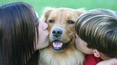 Почему нельзя целовать домашних животных?
